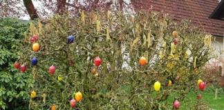 Ostern: Strauch mit Oster-Eiern