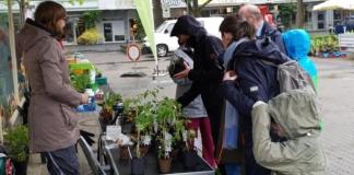 Pflanzenkauf auf dem Flohmarkt